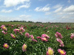 Field in Bloom Pic 11