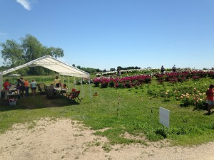 Peony Field Days Pic 7 copy
