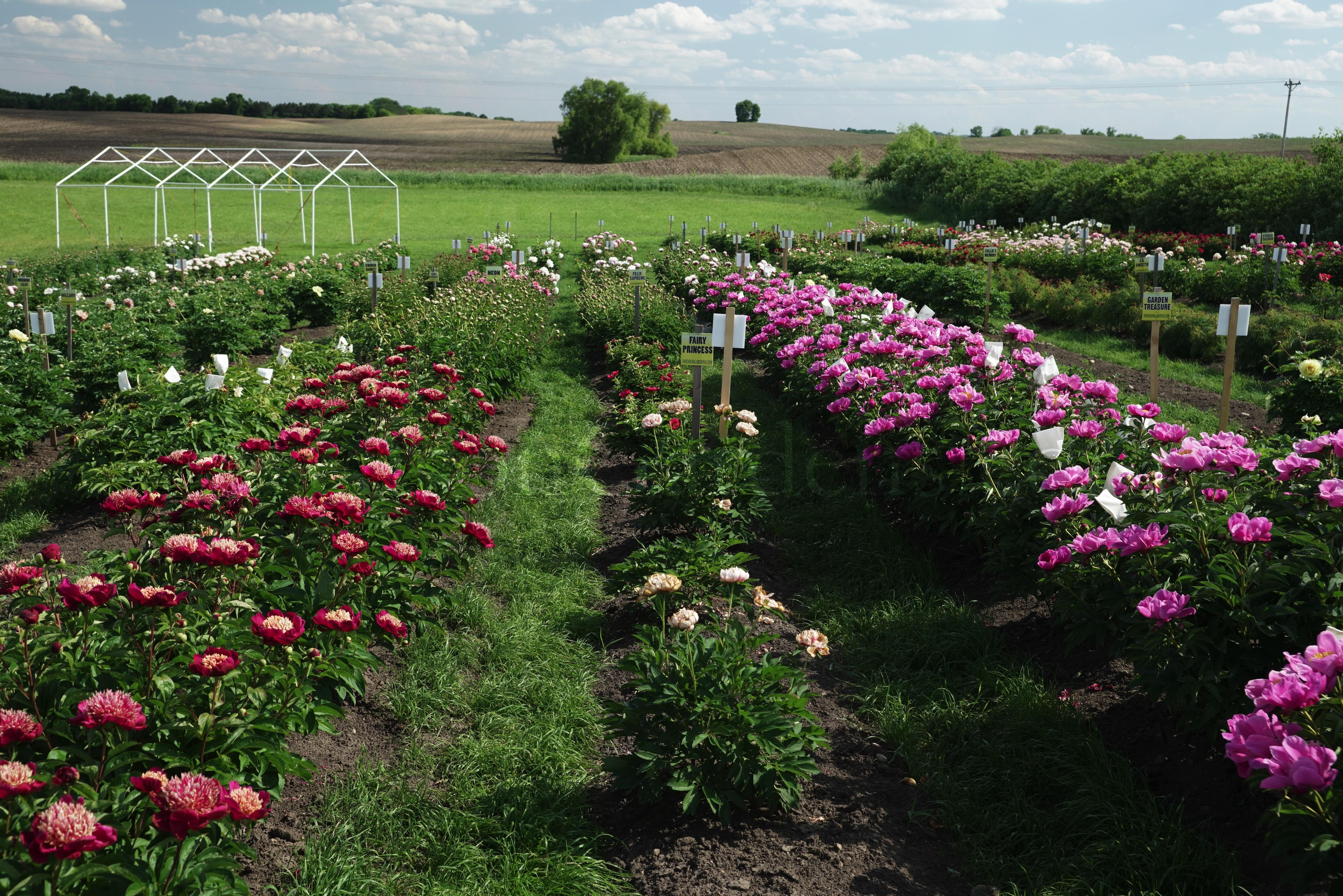 Swenson Gardens Facebook Garden Ftempo